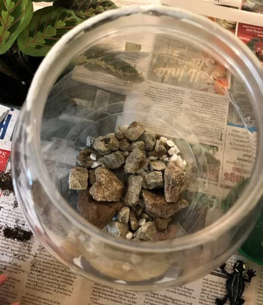layering in the drainage pebbles for the terrarium