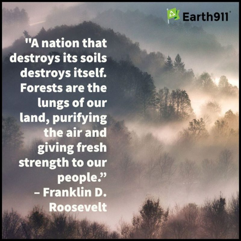 Forests are the lungs of our land ...