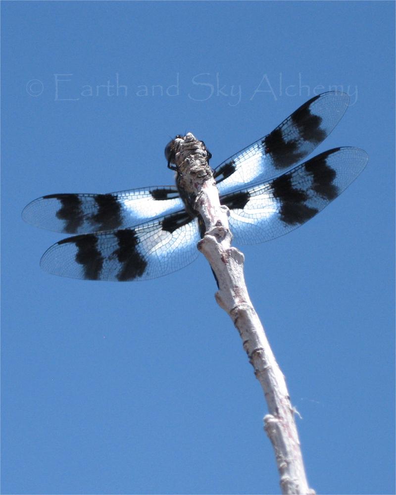 Dragonfly peek