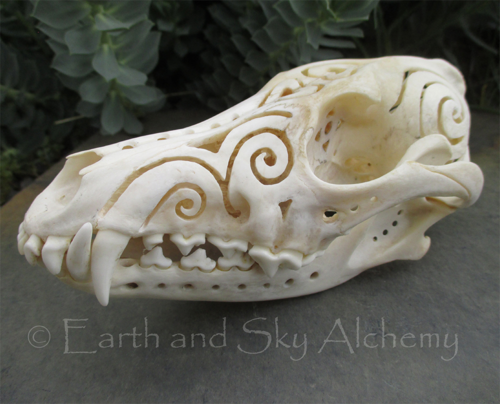 Hand carved coyote skull