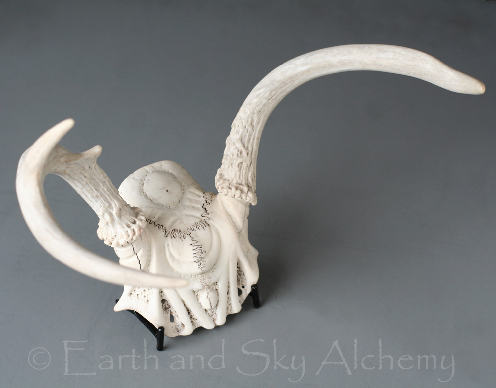 Hand carved deer skull plate with antlers