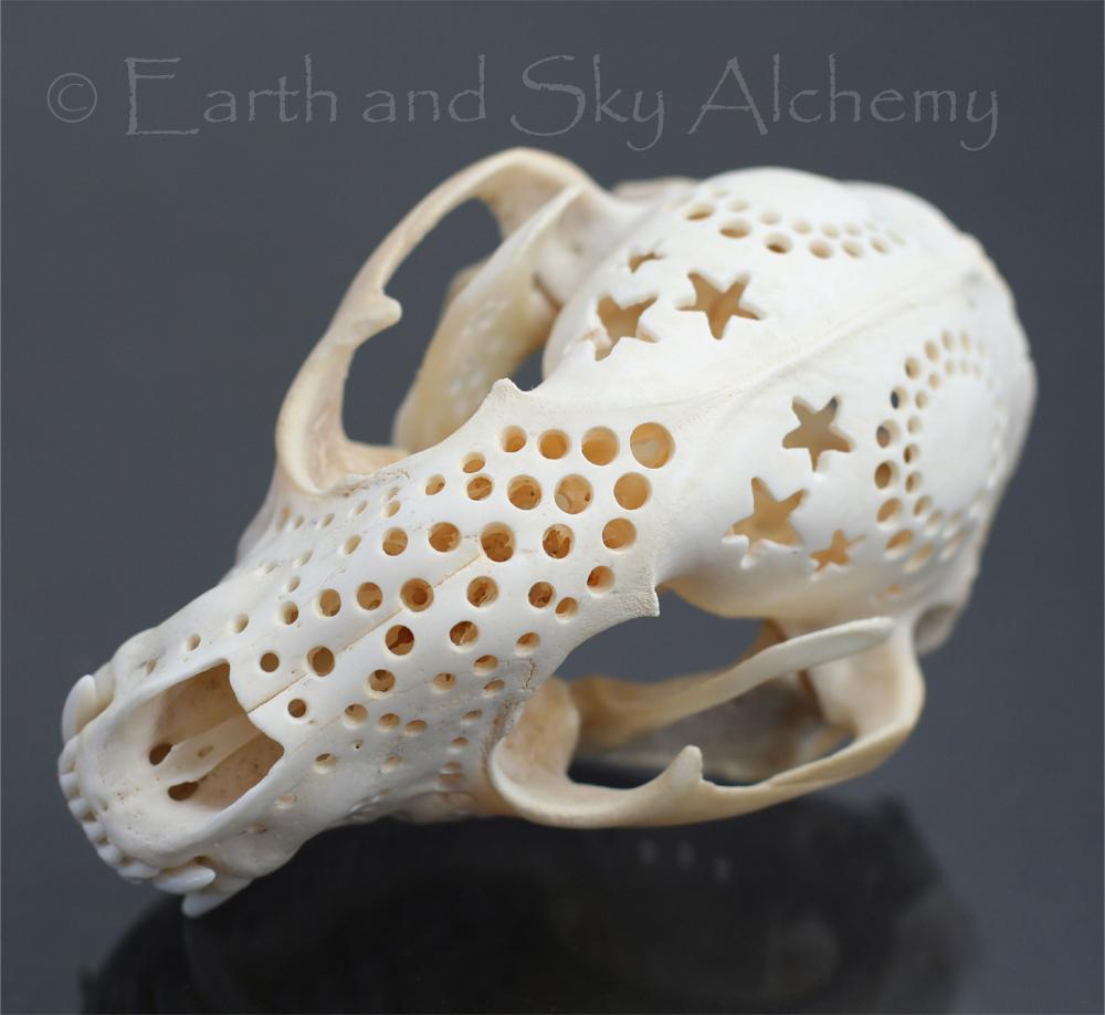 Hand carved raccoon skull