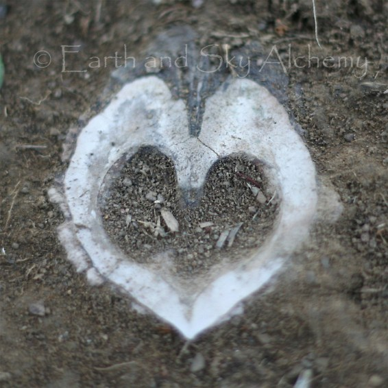 Walnut heart in earth