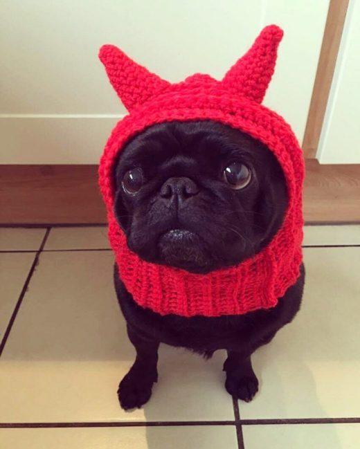 devil-costume-for-pets