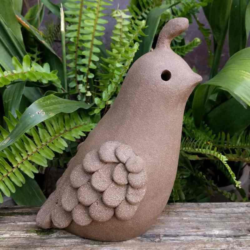 smaller_male_quail_outside_13