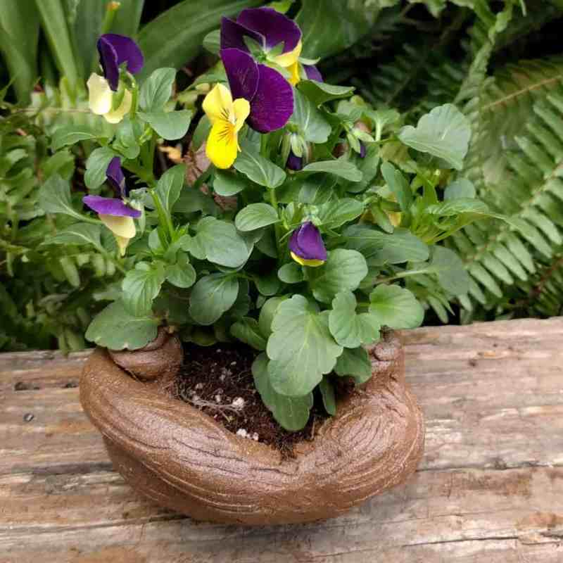 cat_back_planter_flowers_greenspace_9