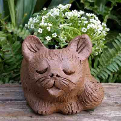cat_curled_planter_flowers_greenspace_10