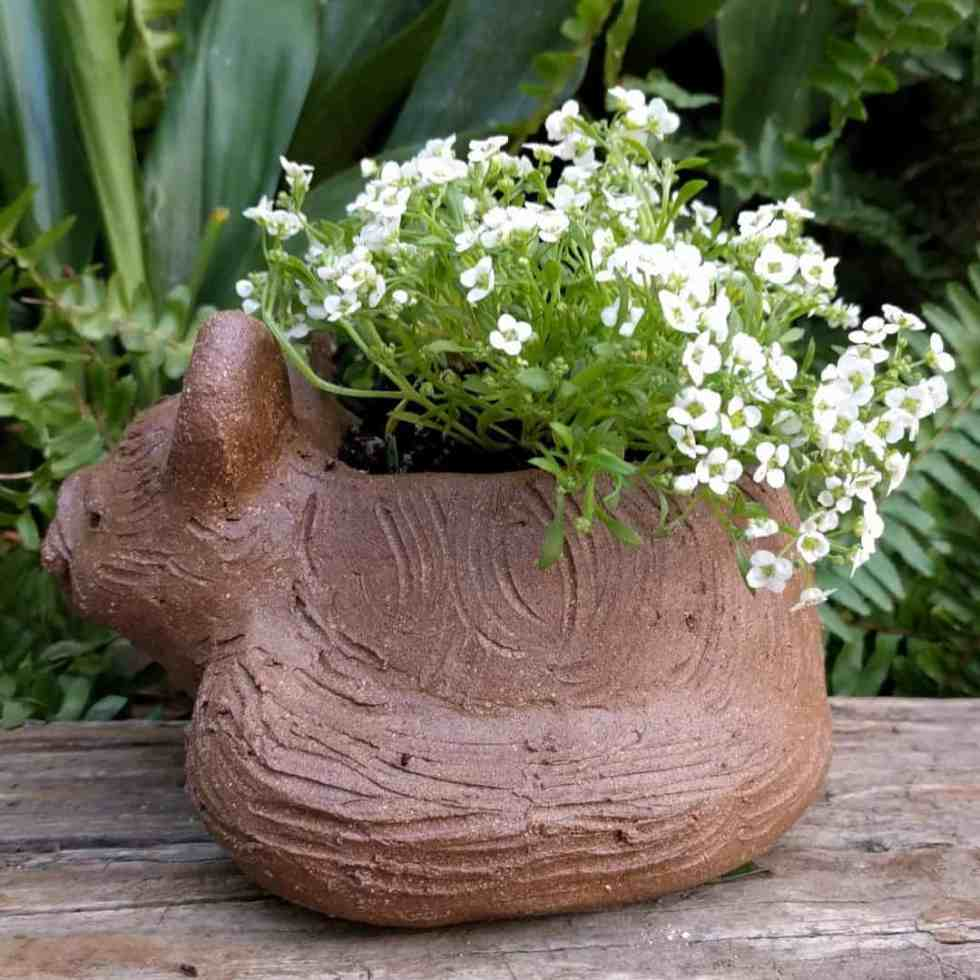 cat_curled_planter_flowers_greenspace_11