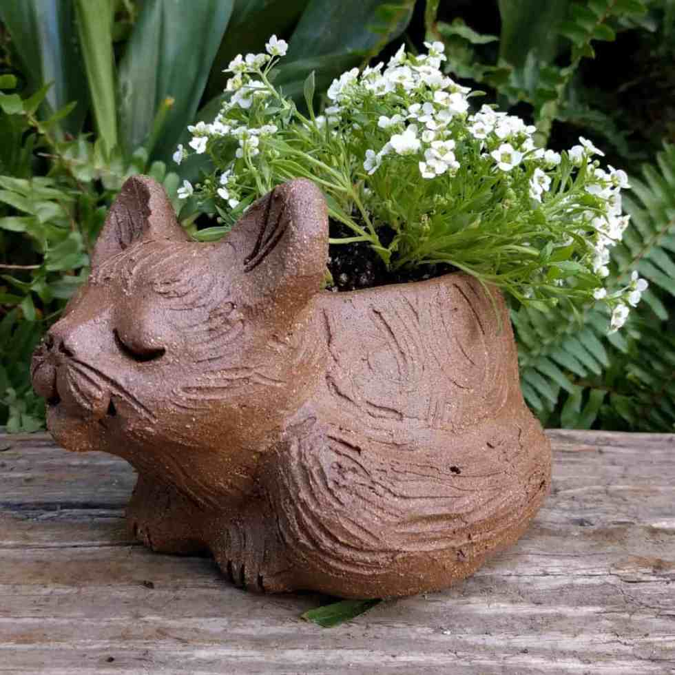 cat_curled_planter_flowers_greenspace_4