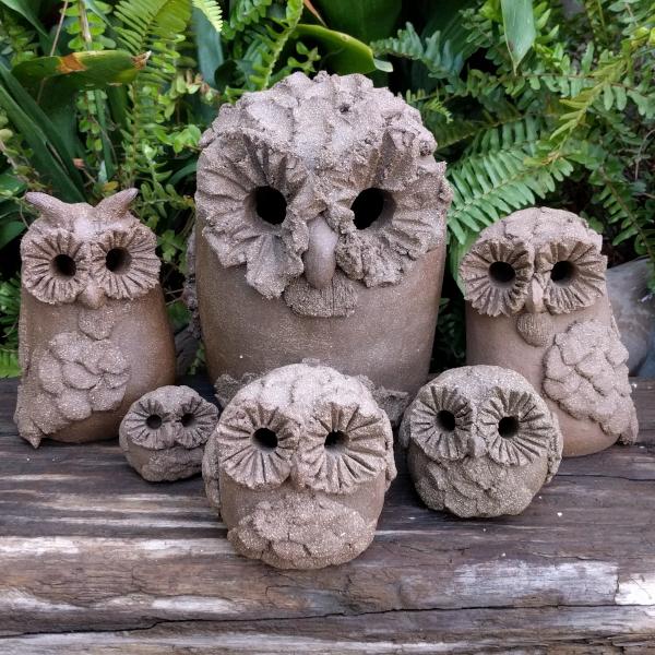owl-group-shot-1-1-600px