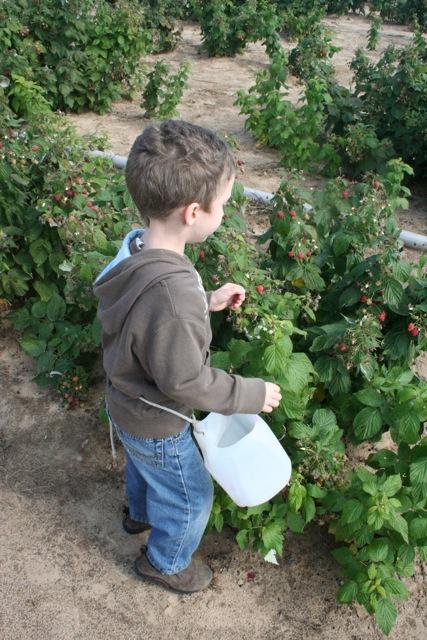 Tiny Dancer, berry farmer