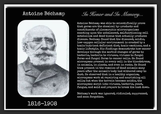 Antoine Béchamp 1816-1908 In Honor and In Memory... Antoine Béchamp was able to scientifically prove that germs are the chemical by-products and constituents of unbalanced, malfunctioning cell metabolism and dead tissue that actually produces disease, Béchamp found that diseased, acidic, low-oxygen cellular environment is created by a toxic/nutrient deficient diet, toxic emotions, and a toxic lifestyle. His findings demonstrate how cancer develops through the morbid changes of germs to bacteria, bacteria to viruses, viruses to fungal forms and fungal forms to cancer cells. He found microzymas present in every cell in the bloodstream, in animals, in plants, and even in rocks. He found them present in the remains of dead animals many years after the animal's body had withered away to dust. He observed that in healthy organism, microzymas work at repairing and nourishing all cells, but when the terrain becomes acidic, the microzymas morph into viruses, bacteria, yeast, fungus, and mold and prepare to break the host down.  Béchamp's work was ignored, ridiculed, suppressed and soon forgotten.
