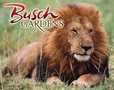 busch_gardens_lion