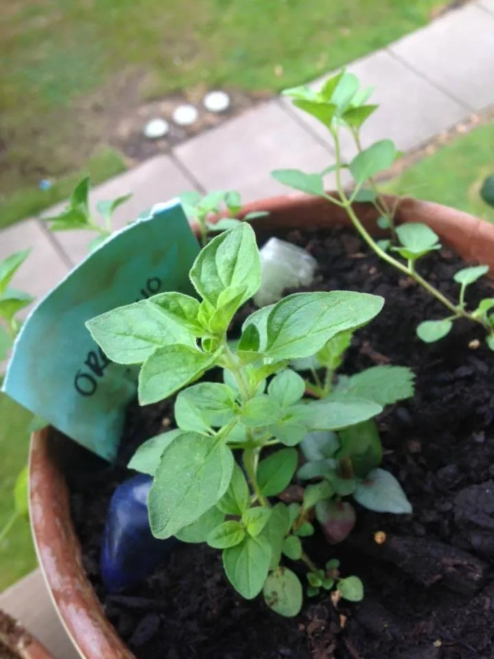 grow-your-own-health-3