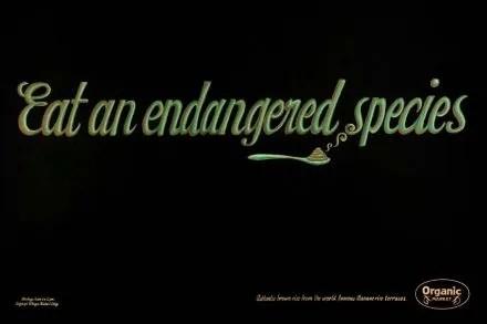 legaspi-market-eat-an-endangered-species-4374