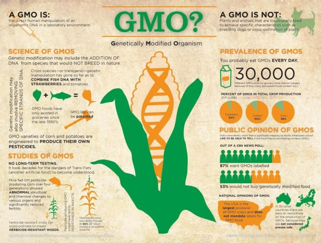 what-are-gmos