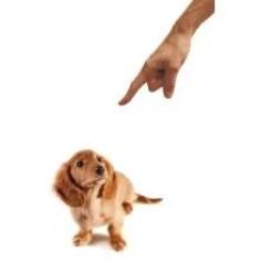 finger-pointing-punishing-dog