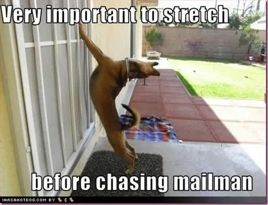 funnydogpicturesimportantstretch_thumb