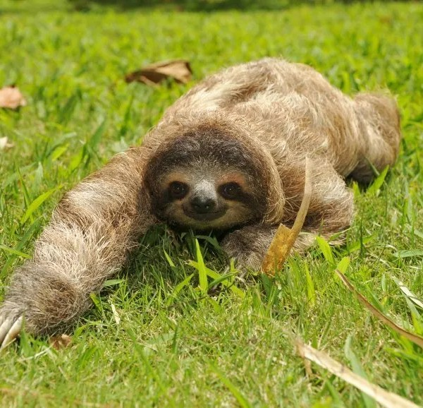 30 Days of ZooFit: Day 9- The Return of the Sloth Army