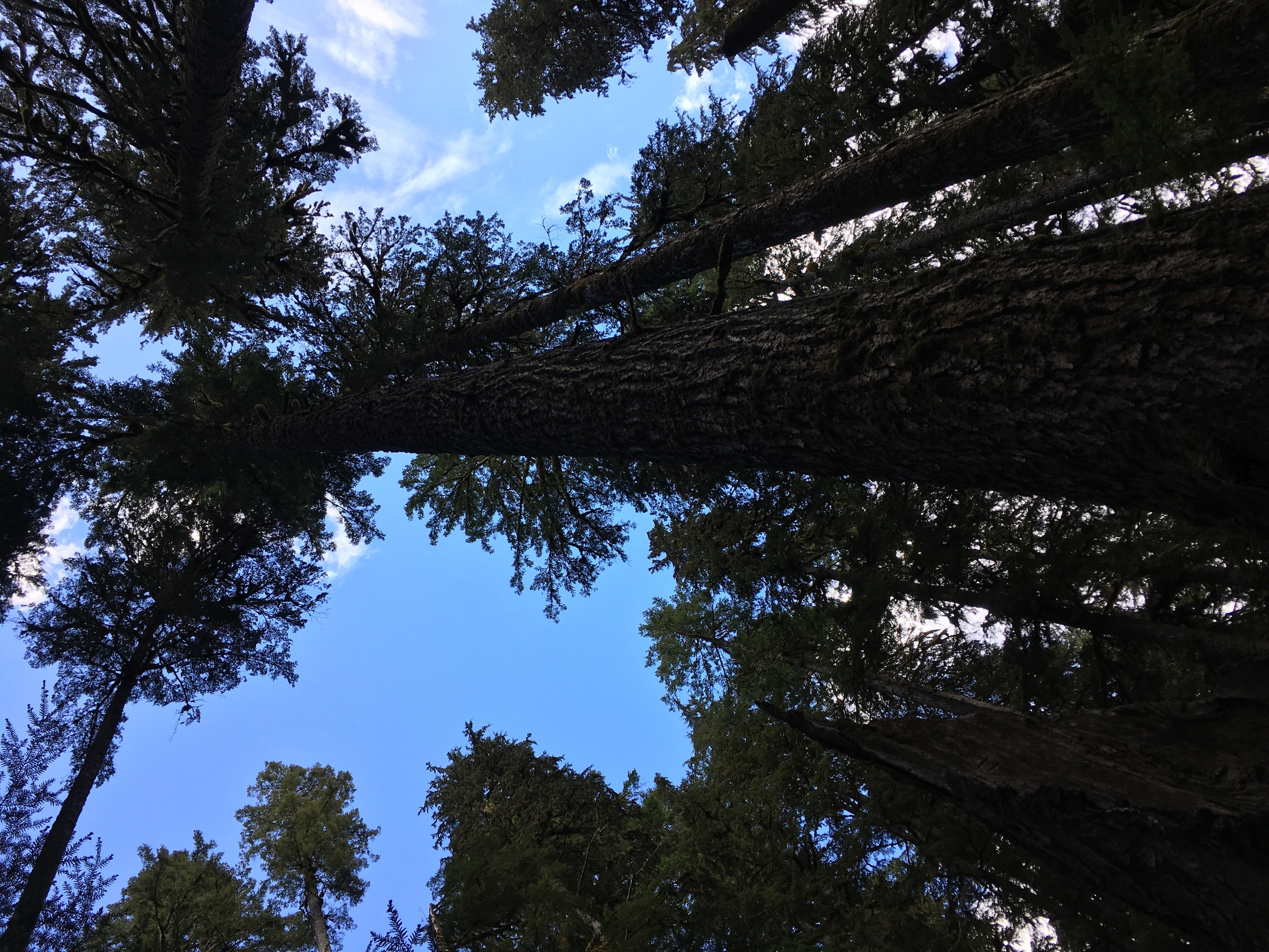 30 Days of Experiencing Nature: Day 3- Take a Hike!