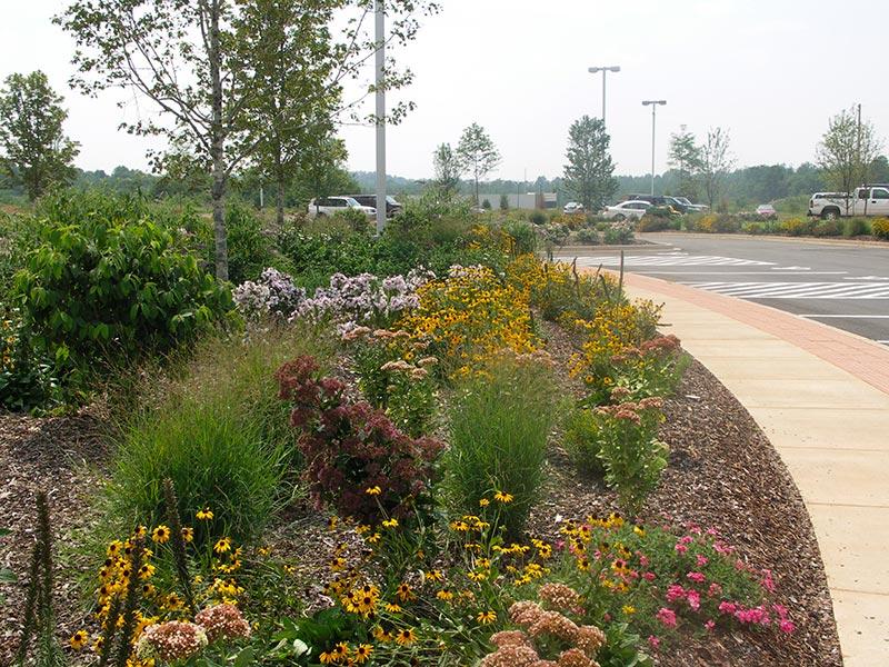 earth-design-landscape-architecture-pickens-sc-walgreens-1 - Walgreens Earth Design Landscape Architecture & Environmental