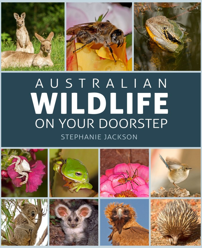 Australian Wildlife On Your Doorstep (New Holland Publishers, 2019) RRP $39.99 available from all good book retailers or online www.newhollandpublishers.com