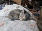 One of our cute kittens, this one is a girl named, Elsa.