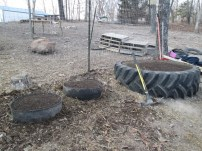Filled two more little tires, then the girls and I planted them. One little tire has Chickweed (Stellaria media) in it, and the other is planted with Stinging Nettle (Urtica diotica)