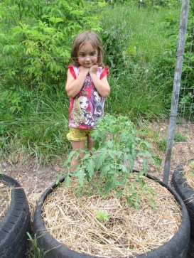 Marlee behind one of my heirloom Mt Barnes Yellow tomato plant.