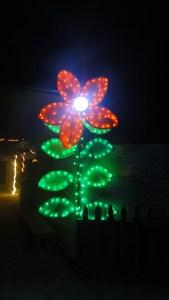 Flower at EG Pavilion