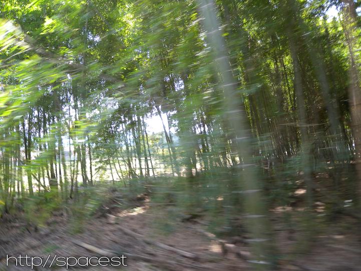 bamboo forest Nikko Kaido