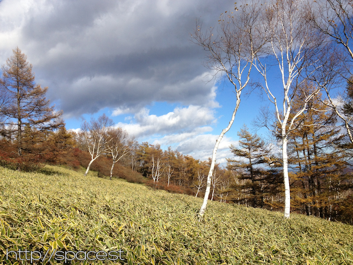 birch trees and dark clouds