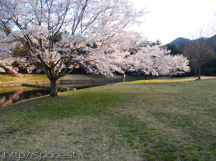 The cherry blossoms have also started to bloom atthe nearby park.