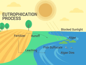 Eutrophication Process