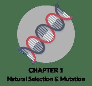 Natural Selection and Mutation