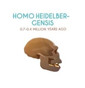 Homo Heidelber-Gensis