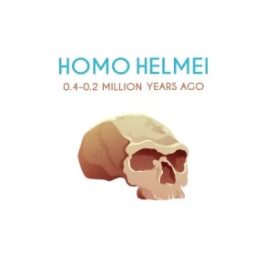 Homo Helmei