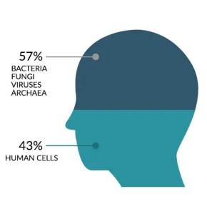 Bacteria Human Cells Body