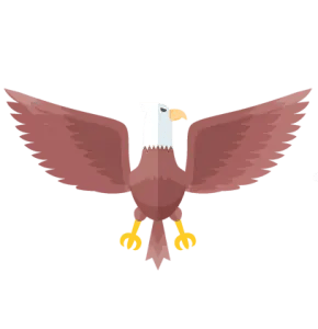 carnivore bald eagle