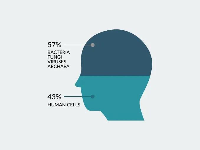 Human Cells Bacteria