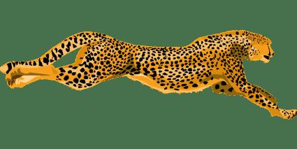 Earth Speed Cheetah
