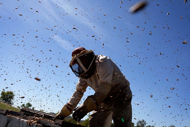 Beekeeper Jeff Anderson checks on his bees to make sure the queen bee is producing a healthy brood.