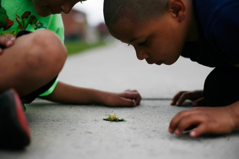 Brayton (left) and Jahcere, both six years old, watch a snail crawl across the sidewalk.