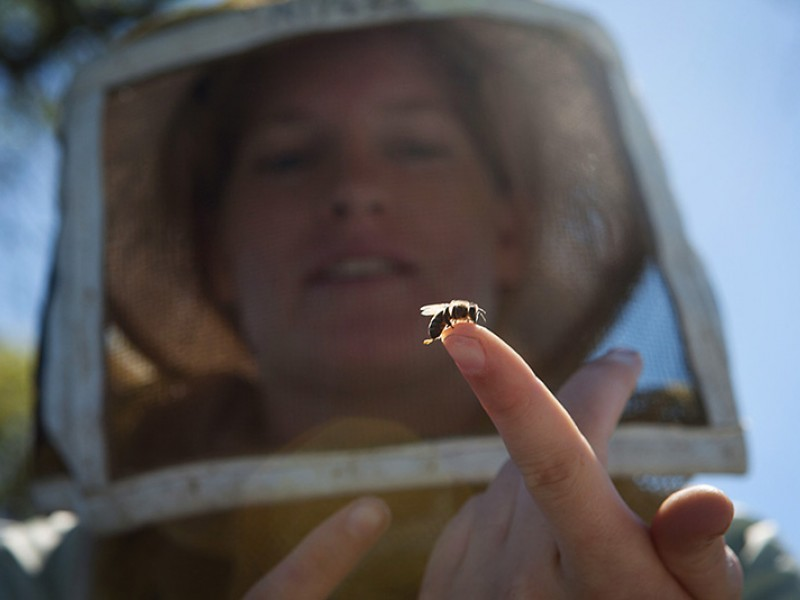 Alyssa Anderson, daughter of a beekeeper, holds a baby bee in a California orchard.