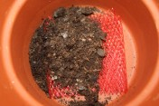 Then filled the plant pot with our potting mix