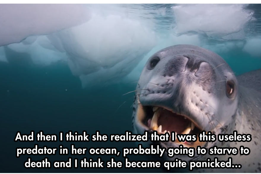 A Close Encounter With A Leopard Seal Earthly Mission