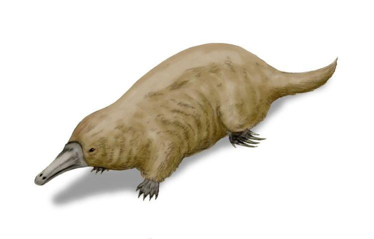 Steropodon