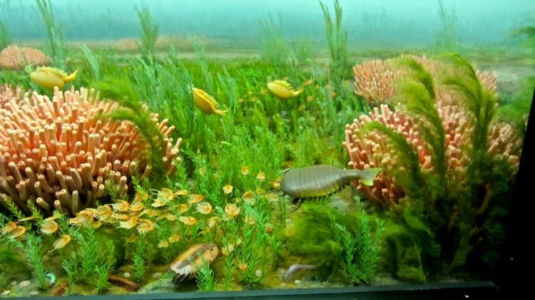 Cambrian diorama