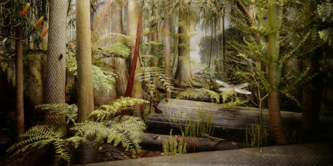 Carboniferous rain forest