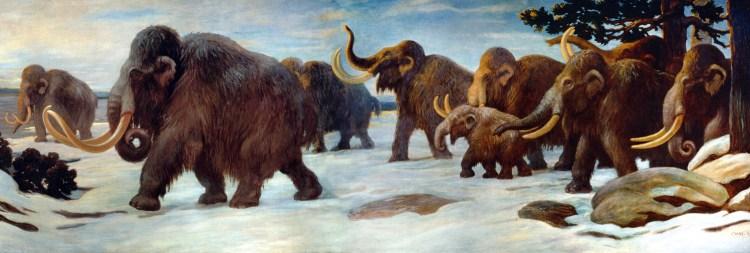 Mammoth herd